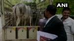 राजस्थान में गाय को कोर्ट के भीतर किया  गया पेश,  जज ने सुनाया फैसला