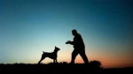 पीछा छुड़ाने के लिए कुत्ते को ट्रेन में बैठाया , फिर भी मालिक को ढूंढते हुए 200 किलोमीटर पहुंचा