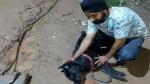 करंट से बचाने को कुत्ते ने हाथ पर काटा, अपनी जान देकर मालिक को ऐसे बचाया