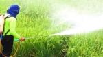 गुजरात में बिक रहे नकली कीटनाशक, टेस्ट में 259 सैंपल फेल, किसानों की फसलें हो रहीं बरबाद