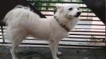 पड़ोसी के कुत्ते से नाजायज संबंध का हवाला देकर पालतु कुत्ते को घर से निकाला, गले में बांधा लेटर