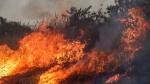अमेजन के जंगल में लगी आग को लेकर फ्रांस और ब्राजील के राष्ट्रपति आपस में भिड़े