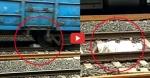 VIDEO: बुजुर्ग के ऊपर से गुजर गई मालगाड़ी की 40 बोगियां और एक खरोंच तक नहीं आई, उठा और चल दिया