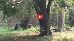 VIDEO: दिल्ली चिड़ियाघर में शेर के बाड़े में घुसा शख्स, कभी बैठकर तो कभी लेटकर करने लगा अजीब हरकत