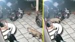 वीडियो: गुजरात में घर के दरवाजे पर अकेले सो रहे कुत्ते को तेंदुए ने बनाया निशाना,
