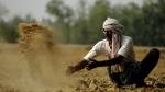 बेमौसम बारिश से बर्बाद हुई फसल के लिए किसानों को 700 करोड़ की मदद देगी गुजरात सरकार