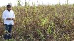 फसल दिखाकर हार्दिक बोले— भाजपा राज में किसान बर्बाद हो रहा है, गांव-खेत मूर्छित हो गए हैं