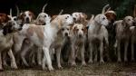 प्रेग्नेंट महिला को 5 कुत्तों ने नोंच-नोंच कर मार डाला, जंगल में मिली खून से लथपथ लाश