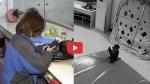 VIDEO: चिड़ियाघर में बंदर के हाथ लग गया लड़की का फोन, तो कर डाली धड़ाधड़ ऑनलाइन शॉपिंग, फिर...