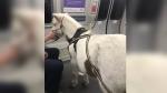 पालतू घोड़े को लेकर ट्रेन में सफर करने पहुंची महिला, यात्रियों का था ऐसा रिएक्शन, देखें तस्वीरें