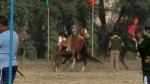 CM रूपाणी की मौजूदगी में अश्व शो में बेकाबू हुए घोड़े, पुलिसकर्मियों में भगदड़ मची, VIDEO