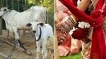 गाय की मौत के प्रायश्चित के लिए पिता कर रहा था नाबालिग बेटी की शादी, पुलिस ने रुकवाई