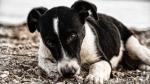 किंग के बर्थडे पर भूटानी पीएम की जनता से अपील, आवारा कुत्तों और पौधों को गोद लें