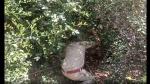 लॉकडाउन में हॉस्टल के लिए निकली छात्रा दो दिन से स्कूल की झाड़ियों में छिपी रही, वजह बनी पहेली