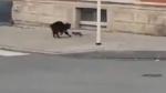 चूहे के एक पंच से हवा में उछली बिल्ली, दोनों के बीच हुई खतरनाक लड़ाई का वीडियो वायरल