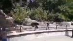 शराब के नशे में धुत आदमी भालू से भिड़ा, जबड़ा पकड़कर की डुबाने की कोशिश फिर... देखें वायरल वीडियो