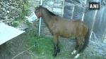 जम्मू-कश्मीर:  राजोरी में घोड़े को किया गया क्वारंटाइन, मालिक से साथ रेड जोन से था लौटा