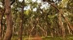 लॉकडाउन में प्रकृति आराम नहीं कर रही, कोरोना दुनियाभर के जंगलों को पहुंचा रहा भारी नुकसान