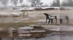 निसर्ग तूफान का असर : बारिश ने खोली मध्य प्रदेश सरकार की पोल, खरीद केन्द्रों पर भीगा गेहूं