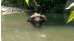 झारखंड: जिस हाथी ने इलाके में किया तांडव, उसको घायल और रोते देख लोग कर रहे उसकी देखभाल