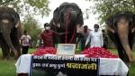 हाथियों ने केरल की हथिनी की फोटो पर माला चढ़ाकर दी श्रद्धांजलि, सूंड उठाकर किया सलाम