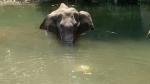 Elephant Death in Kerala: मायावती का फूटा गुस्सा, सरकार से दोषियों को सख्त सजा की मांग