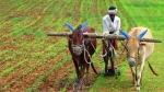 कोरोना संकट के बीच अब कृषि विज्ञान और प्राकृतिक खेती को दी जा रही तबज्जों, जानें क्यों