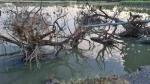 गोपालगंजः बाढ़ का पानी उतरते ही मिली दो भाइयों की लाश, मंजर देखकर हर कोई रह गया हैरान