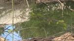 त्यौहार पर मामा के घर आया भांजा, नहाने के लिए तालाब में जा कूदा, डूबने से मौत