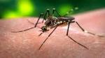 कोरोना महामारी के बीच चीन के एक और वायरस का भारत पर मंडरा रहा खतरा