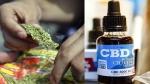 कनाडा की कंपनी ने किया भांग से कोरोना की दवा बनाने का दावा, भारत के मरीजों पर करना चाहती है ट्रायल