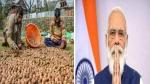 J&K:अखरोट की हुई बंपर पैदावार, अब पीएम मोदी से क्या मदद चाहते हैं किसान