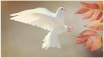International Peace Day: जानिए कबूतर क्यों है दुनिया में शांति का प्रतीक
