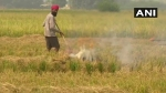 पंजाब-हरियाणा में पराली जलाने पर रोक को लेकर दिल्ली हाईकोर्ट में याचिका