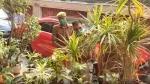 BSP सांसद मलूक नागर के ठिकानों पर आयकर विभाग का छापा, नोएडा और हापुड़ में हो रही है कार्रवाई