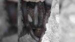 सहारनपुर: दीवार में फंसा था नाग-नागिन का जोड़ा, किसान ने देखा तो हार्ट अटैक से हुई मौत