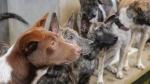 जानिए भारत में कहां बेचा जा सकेगा कुत्तों का मांस, HC ने सरकार के प्रतिबंध पर लगाई रोक