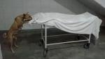 शर्मनाक: अस्पताल में रखे शव को नोंचते रहे कुत्ते, Video वायरल