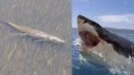Video में देखिए, क्या हुआ जब विशाल मगरमच्छ का बुल शार्क से हुआ सामना, कौन किस पर पड़ा भारी
