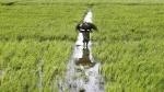 Budget 2021: किसानों के लिए बड़ा ऐलान कर सकती है सरकार, 19 लाख करोड़ तक मिलेगा कृषि लोन