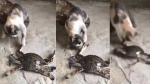 VIDEO: केकड़े के साथ छेड़खानी बिल्ली को पड़ी भारी, सबक सिखाने के लिए किया कुछ ऐसा