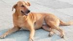 कानपुर: एक साथ आठ कुत्तों की मौत से हड़कंप, शरीर में मिला ये वायरस