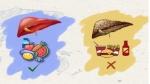 World Liver Day: लीवर को हेल्दी रखने के लिए क्या करें और क्या ना करें, इन 10 टिप्स का रखें खास ध्यान