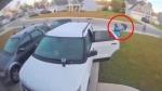 वीडियो: जंगली बिल्ली ने पत्नी पर किया हमला तो पति ने बिल्ली का किया ये हाल