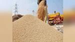 हरियाणा में सरकारी एजेंसियों द्वारा किसानों से MSP पर खरीदे गए 45 लाख टन से ज्यादा गेंहू