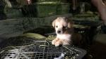 अमानवीय हरकत पर उतरा चीन, डिब्बे में बंदकर पालतू जानवरों की बिक्री, दम घुटने और चोट लगने से जा रही है जान