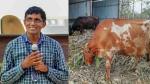 IIT पास इंजीनियर ने अमेरिका की नौकरी छोड़ खरीदीं 20 गायें, खड़ी कर दी 44 करोड़ रेवेन्यू वाली डेयर फर्म