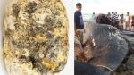 समुद्र में मछुआरों के हाथ लगा 'दुलर्भ खजाना', तैरती मिली व्हेल की उल्टी और बन गये करोड़पति