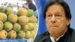 चीन और अमेरिका को रास नहीं आई पाकिस्तान की 'मैंगो डिप्लोमेसी', वापस लौटाए तोहफे में भेजे गए आम