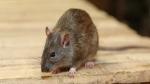 गजब! 6 साल तक अंतरिक्ष में फ्रीज करके रखा गया चूहे का स्पर्म, वापस धरती पर आया तो पैदा हुए स्वस्थ बच्चे